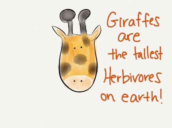 giraffe herbivore